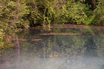 silent-pool-3199 